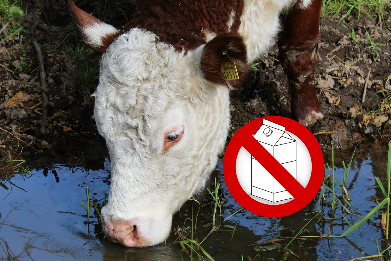 stop drinking milk